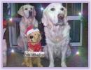 Weihnachten 2012_1